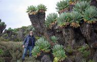 Под тенью Килиманджаро
