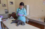 Я - ветеринарный врач!