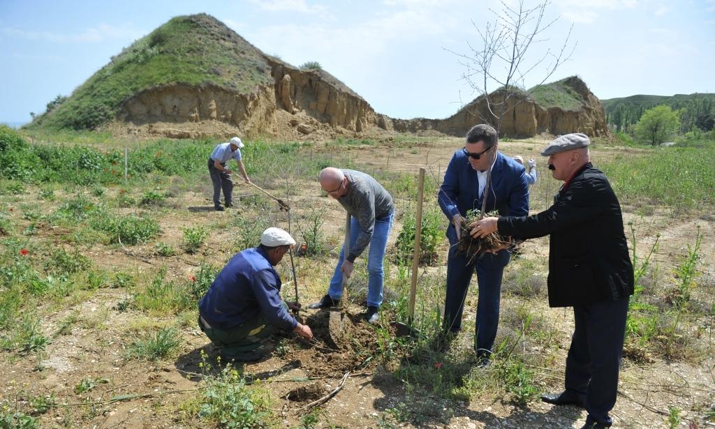 На берегу Каспия вблизи поселка «Ачи-Су» высажено более 150 молодых деревьев