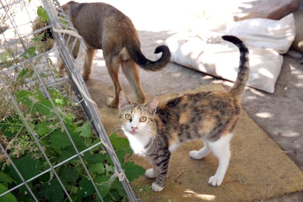 В столице Дагестана будет создан приют для бездомных животных