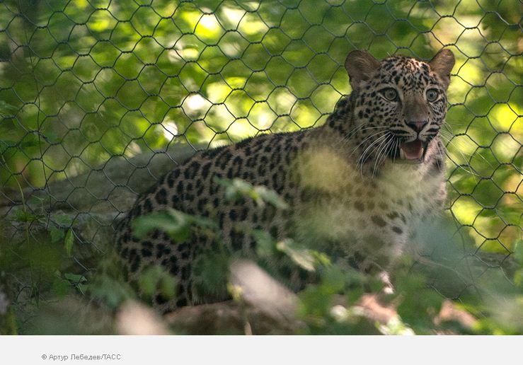 Трансграничный  резерват для леопардов