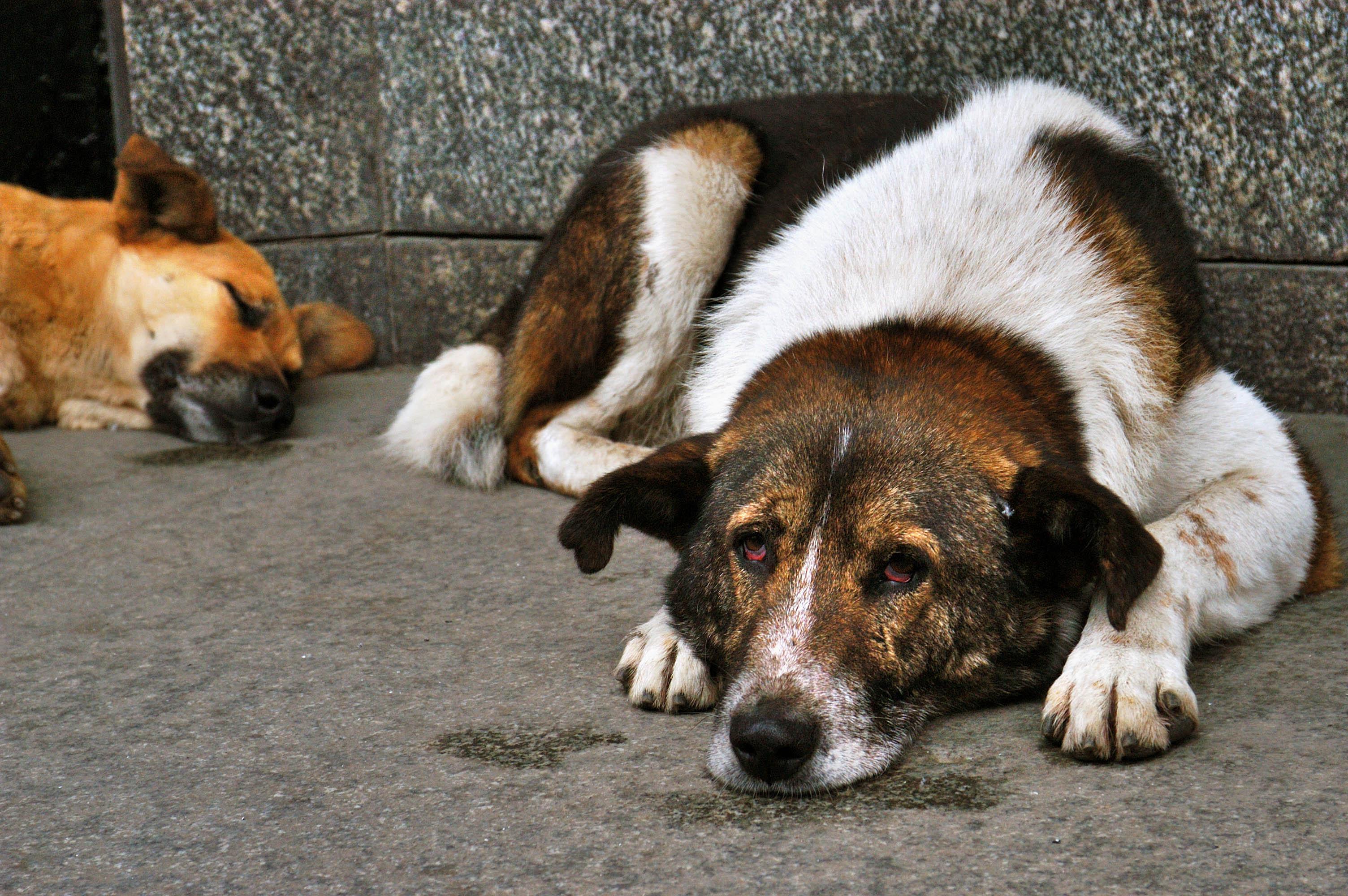 Жители Дагестана требуют прекратить отстрел бродячих собак