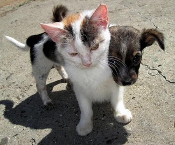 В  дагестанском поселке Ленинкент  будет создан приют для животных