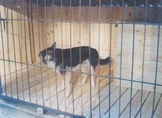 Питомник в столице Дагестана спасет собак от отстрела