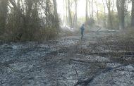 Уникальный Самурский лес горит на границе Дагестана и Азербайджана