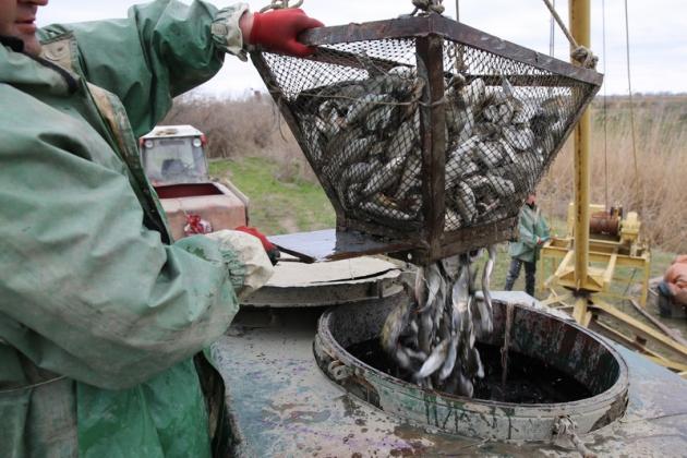 Глава Дагестана осмотрел водные объекты прибрежной полосы Каспийского моря