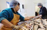 Обеспеченность рыбой в Дагестане поднялась до 12% - Абдулатипов
