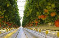 В Дагестане планируется создать сеть агрологистических центров