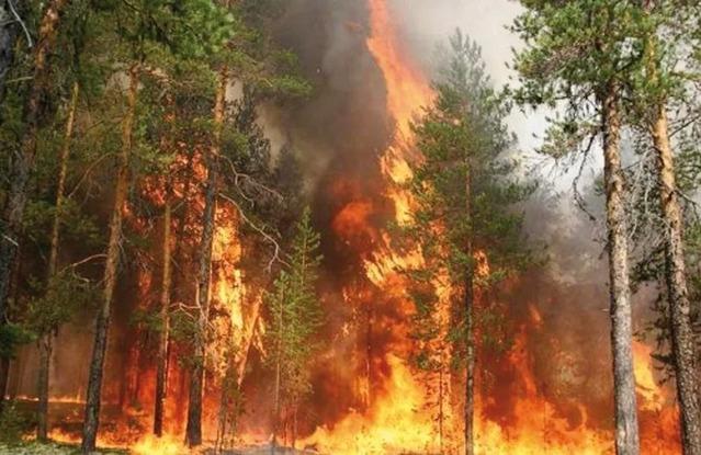 Чрезвычайная пожароопасность ожидается в Дагестане в ближайшие три дня – МЧС