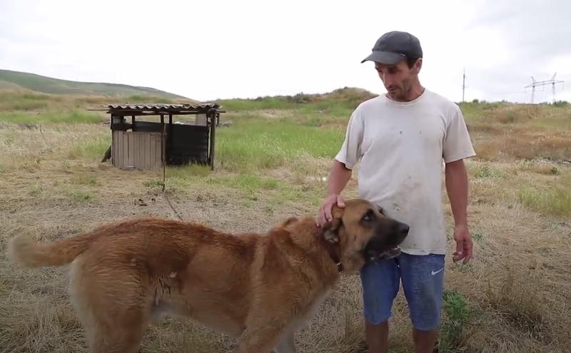 Дагестанец приютил 90 брошенных собак