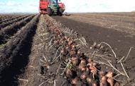 В Дагестане собрали 451 тысяч тонн овощей