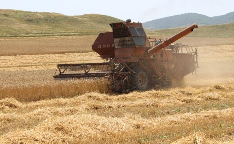 В Дагестане собрали 180 тысяч тонн урожая озимых культур