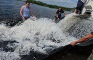 Около 9,6 миллионов молоди кутума выпустили в Каспийское море