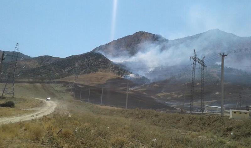 В Ленинкенте потушили лесной пожар