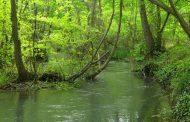 Президент России дал поручение по защите Самурского леса