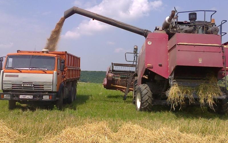 В Дагестане урожай озимых зерновых культур превысил 197 тысяч тонн
