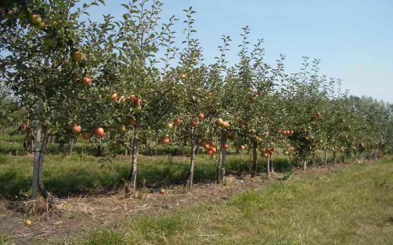 В дагестанских садах собрали более 92 тысяч тонн плодов
