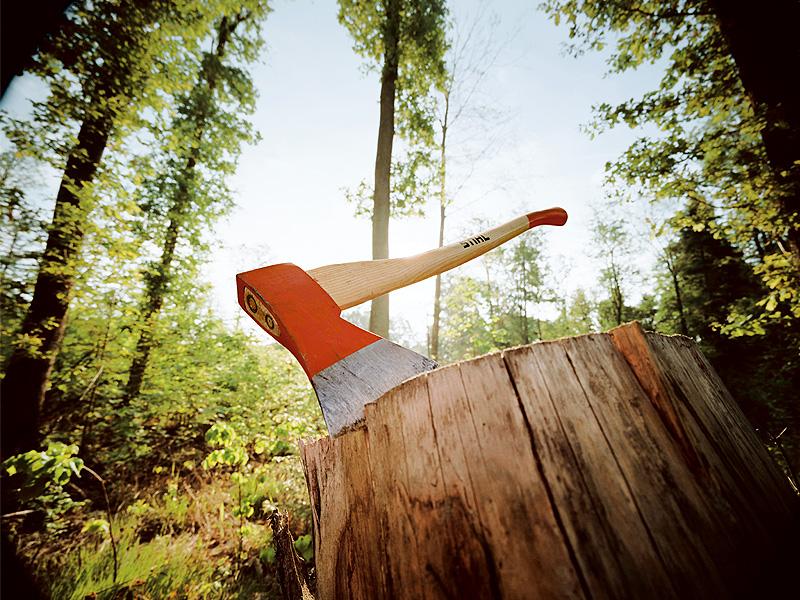 Буйнакское лесничество ответит за незаконную рубку леса