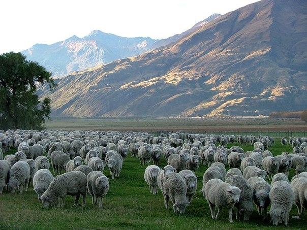 Отгонные пастбища Дагестана защитят от опустынивания