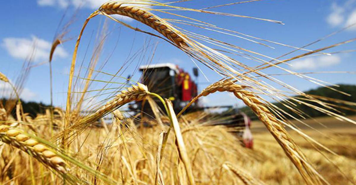 Сельхозпроизводители Дагестана перевыполнили план за 2017 год