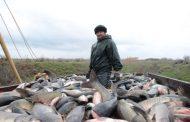Вылов рыбы в Дагестане увеличился в полтора раза