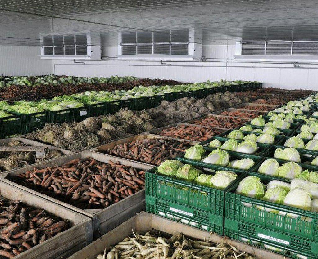 Сеть овощехранилищ создадут в Дагестане