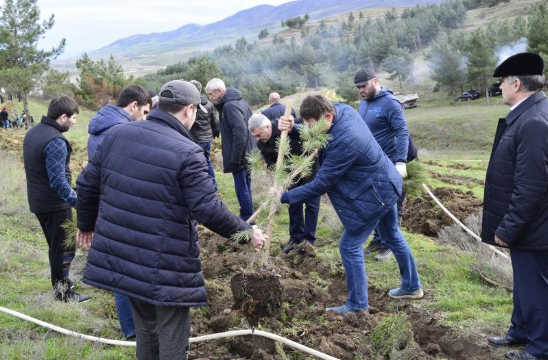 В Дагестане посадят более миллиона саженцев