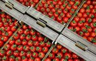 Россельхознадзор разрешил ввоз в Россию турецких томатов