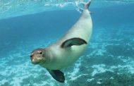 ДГУ будет изучать каспийского тюленя вместе с учеными Университета Лидса
