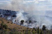Пожар в Гумбетовском районе сжег 12 гектаров леса