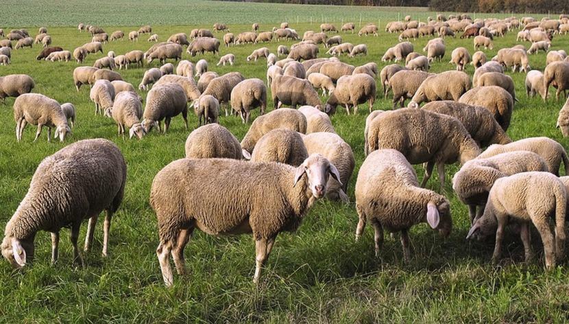 На поддержку дагестанских фермеров будет выделено более 300 млн рублей