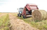 В Дагестане заготовлено более 600 тысяч кормов