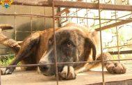 В Махачкале за полгода отловлено около 900 бродячих собак