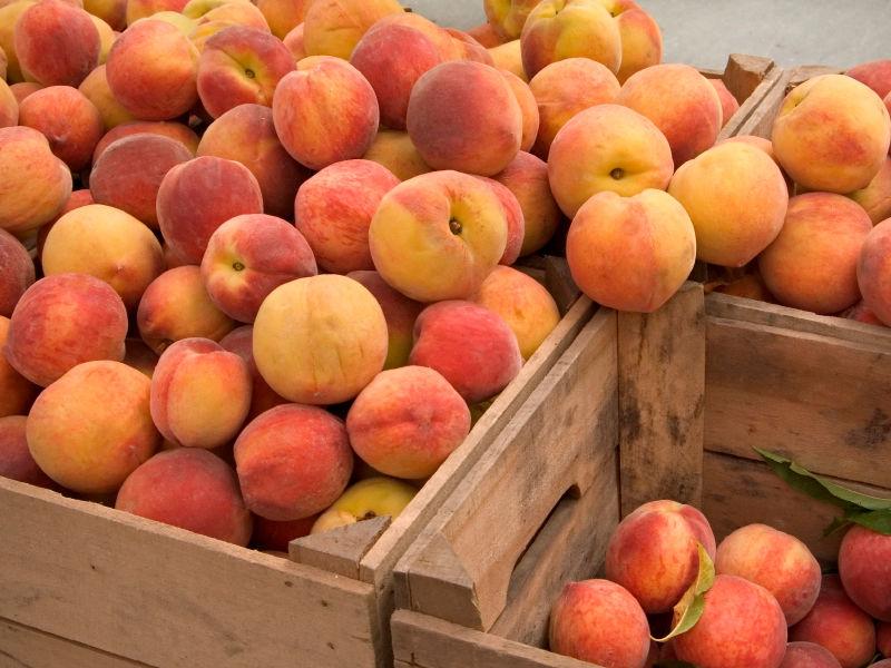 Предотвращен ввоз в Дагестан около 20 тонн зараженных персиков и нектаринов