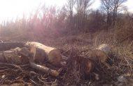 Статус Эльтавского леса определят на сессии горсобрания Махачкалы