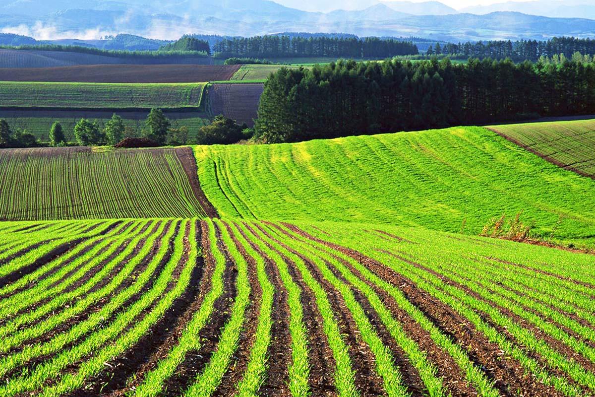Автоматизированную базу данных сельхозземель создадут в Дагестане