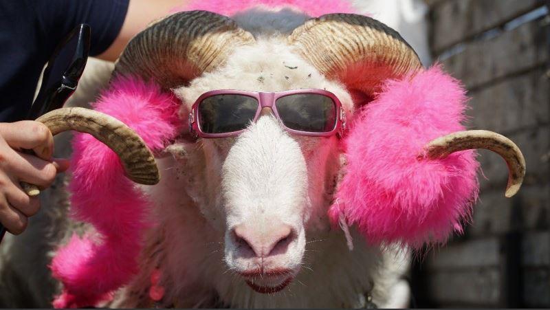 ждала прикольные картинки барашки розовые возможности, так