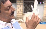 Житель Дербента разводит голубей 60 разных пород