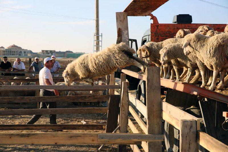 Курбан-байрам объявлен в Дагестане нерабочим днем