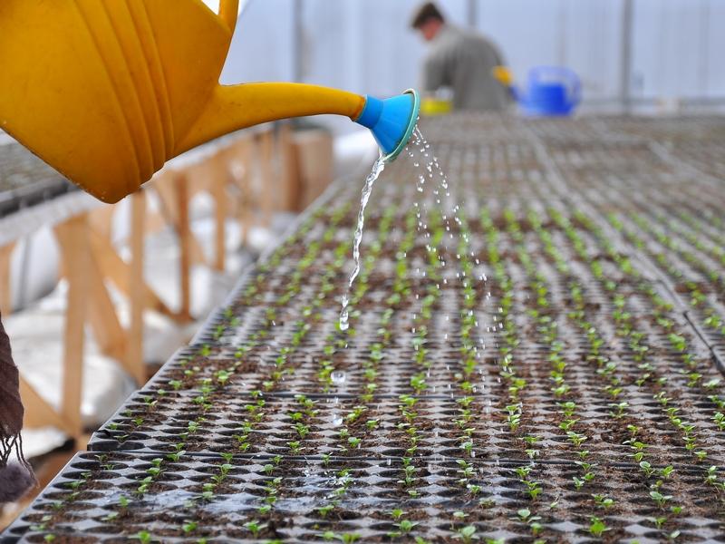 В Дагестане созданы четыре семеноводческих хозяйства