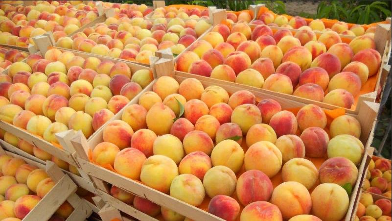 В Дагестане собрано более 545 тысяч тонн овощей