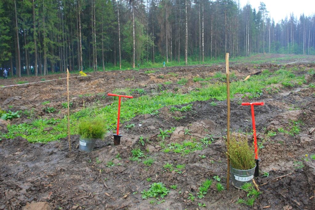 В Дагестане за 6 месяцев лесные культуры созданы на площади 200 гектаров