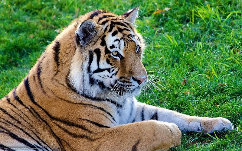 Популяции диких животных сократились на 60 % за 40 лет