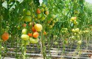 В Дагестане пройдет выставка по технологиям тепличного хозяйства