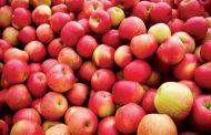В Махачкале уничтожено более 1,2 тонны польских яблок