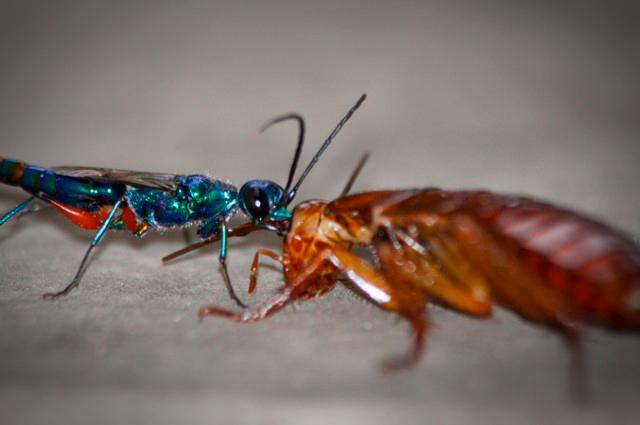 Тараканы используют прием карате, чтобы не стать зомби