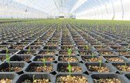 В Хасавюрте планируется создать семеноводческий центр