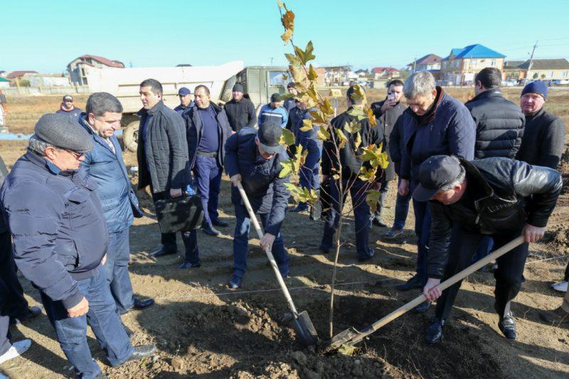 В Дагестане состоялась очередная акция по высадке деревьев