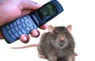 Мобильная радиация вызывает рак сердца у самцов крыс