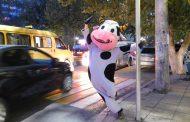 Шкурный интерес. Корреспондент «Молодежки» взглянула на мир глазами коровы